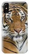 Malayan Tiger 1 IPhone Case