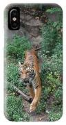 Malayan Tiger IPhone Case
