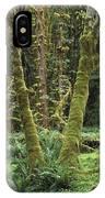 Maple Glade Quinault Rain Forest IPhone Case