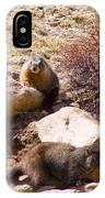 Marmots On Mount Evans IPhone Case