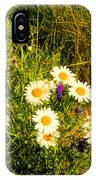 Marshall Point Daisies IPhone Case