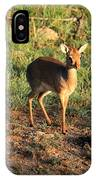 Masai Mara Dikdik Deer IPhone Case