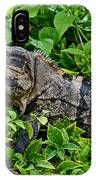 Mexican Spinytailed Iguana  IPhone Case