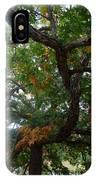 Mighty Fall Oak #2 IPhone Case
