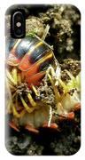 Millipede Polydesmida - Sigmoria Aberrans IPhone Case
