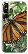 Monarch Butterfly 62 IPhone Case