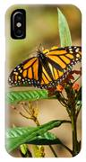 Monarch Butterfly On Plant With Eggs IPhone Case