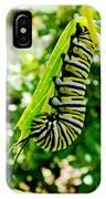 Monarch Caterpillar 5 IPhone Case