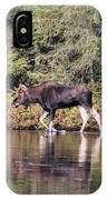 Moose_0587 IPhone Case