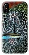 Moray Eel With Cleaner Wrasse IPhone Case