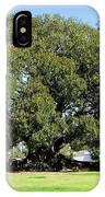 Moreton Fig Tree In Santa Barbara IPhone Case