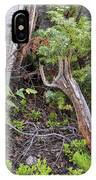 Mountain Forrest Floor IPhone Case