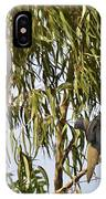 Mourning Doves Landing In Eucalyptus  IPhone Case