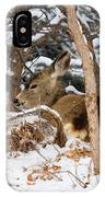 Mule Deer In Snow IPhone Case