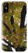 Natural Sunburst Through Autumn Tree IPhone Case
