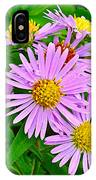 New York Asters In Flower's Cove-newfoundland IPhone Case