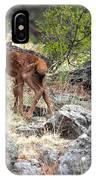 Newborn Elk Calf IPhone X Case