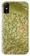 Nezara Viridula 201 IPhone Case