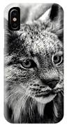 North American Lynx In The Wild. IPhone Case