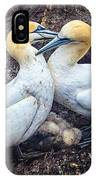 Northern Gannets And Chick 2 IPhone Case