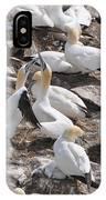Northern Gannets IPhone Case