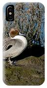 Northern Pintail Pair At Rest IPhone Case