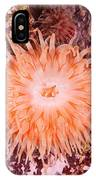 Northern Red Anemone IPhone Case