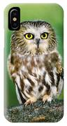 Northern Saw-whet Owl Aegolius Acadicus Wildlife Rescue IPhone Case