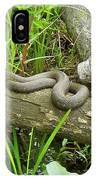 Northern Water Snake - Nerodia Sipedon IPhone Case