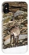 Norway, Troms Male Reindeer (rangifer IPhone Case