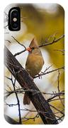 November Cardinal IPhone Case