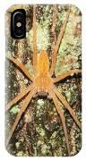 Nursery Web Spider IPhone Case