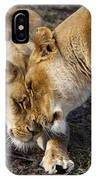 Nuzzling Lions IPhone X Case