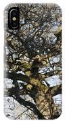 Oak Tree In Winter IPhone Case