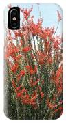 Ocotillo After A Heavy Rain IPhone Case