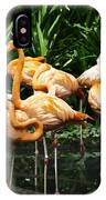 Oil Painting - Number Of Flamingos Inside The Jurong Bird Park IPhone Case