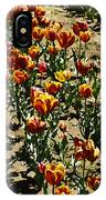 Oil Painting - Red And Yellow Tulips Inside The Tulip Garden In Srinagar IPhone Case