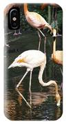 Oil Painting - The Head Of A Flamingo Under Water In The Jurong Bird Park In Singapore IPhone Case