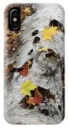 Old Fallen Birch IPhone Case