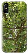 Old Linden Tree IPhone Case