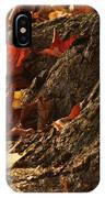 Old Maple Roots In Backlit Autumn IPhone Case