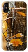 Orange Fall Maple IPhone Case by Elena Elisseeva