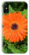 Orange Gerber Daisy 2 IPhone Case