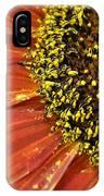 Orange Sunflower Close Up IPhone Case