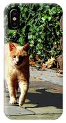 Orange Tabby Taking A Walk IPhone Case