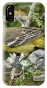 Orchard Oriole Female IPhone Case