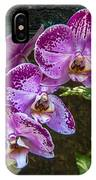 Orchid Flowers Growing Through Old Wooden Picture Frame IPhone Case