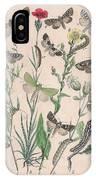 Orthosidae - Hadenidae IPhone Case