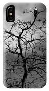Osprey Atop A Poinciana IPhone Case