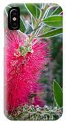 Our Bottlebrush Tree IPhone Case
